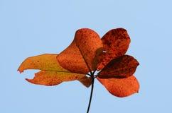 Коричневый цвет и небо листьев перед падать к земле стоковое изображение rf
