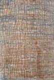 Коричневый цвет и серый цвет текстуры коры дерева Стоковые Фото