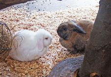 Коричневый цвет 2 кроликов любимца белый в hutch стоковое изображение