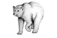 коричневый цвет медведя бесплатная иллюстрация