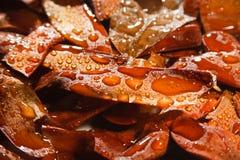 коричневый цвет осеменяет явор влажный Стоковое Изображение RF