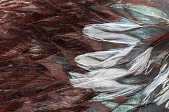 Коричневый цвет пера петуха текстуры Стоковые Изображения RF