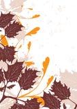 коричневый цвет предпосылок Стоковые Изображения