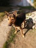 Коричневый цвет собаки и черное в цвете стоковая фотография