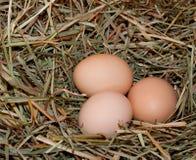коричневый цыпленок eggs сено 3 Стоковые Фотографии RF