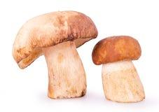 2 коричневых гриба на белой предпосылке Стоковое Изображение