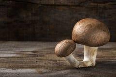 2 коричневых гриба над деревянной предпосылкой с космосом экземпляра Стоковые Фото