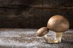 2 коричневых гриба с солью над старой деревенской древесиной Стоковые Изображения RF