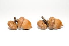 2 коричневых жолудя с шляпами дальше над белизной Стоковые Фотографии RF
