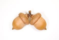 2 коричневых жолудя с шляпами дальше над белизной Стоковые Изображения RF