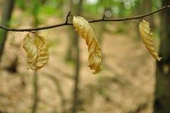 3 коричневых листь Стоковое фото RF