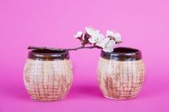 2 коричневых керамических чашки на розовой предпосылке Ветвь с цветками и чашкой цветене абрикоса Утвари для печь Глина стоковые изображения rf