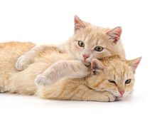 2 коричневых котят Стоковое Изображение