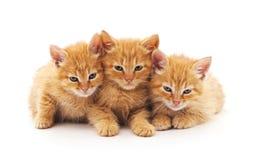 3 коричневых котят Стоковые Фото