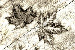 2 коричневых листь осени на деревянном субстрате в черно-белом Стоковые Фотографии RF