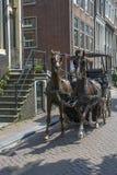 2 коричневых лошади с тренером на мостоваой Стоковое Изображение