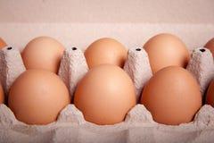 6 коричневых яичек в подносе Стоковое Изображение RF