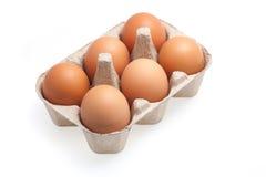 6 коричневых яичек изолированных на белой предпосылке Стоковое фото RF