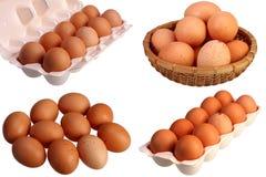 10 коричневых яичек куриц изолированных на белом комплекте предпосылки Стоковые Изображения