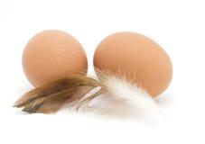 2 коричневых яичка и пера цыпленка Стоковое фото RF