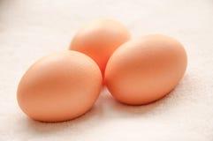 3 коричневых яичка куриц Стоковые Изображения RF