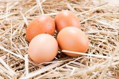 4 коричневых яичка цыпленка в соломе Стоковое Изображение