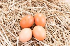 4 коричневых яичка цыпленка в соломе Стоковое фото RF