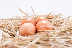 4 коричневых яичка цыпленка в соломе Стоковая Фотография