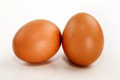 2 коричневых яичка цыпленка на белой предпосылке Стоковые Фотографии RF