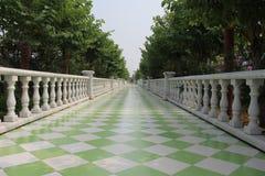 Коридор зеленого цвета сада солнцецвета Стоковое Фото