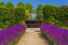 Коридор фиолетового шалфея цветет sunlit Стоковое Изображение