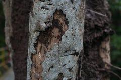 Корка крупного плана сухая дерева Стоковые Фотографии RF