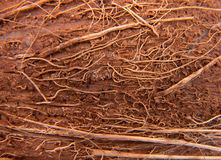 корка макроса кокоса предпосылки коричневая стоковое изображение