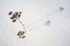корка 2 подчеркивает текстуру поверхности солнечного света снежка картины замороженного озера естественную тонко Стоковые Изображения RF