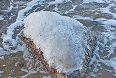 Корка льда на камне, конце вверх Стоковая Фотография