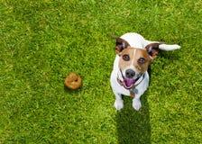 Корма собаки на траве в парке Стоковые Изображения RF