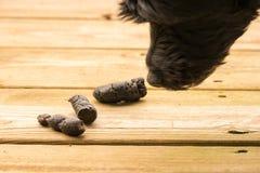 Корма собаки на украшать снаружи Стоковая Фотография RF