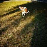 Корма собаки Стоковые Фотографии RF
