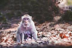 Кормя грудью обезьяна Стоковое Фото