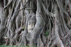 Корни головы и баньяна Будды стоковое фото rf