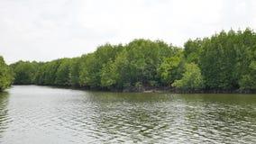 Корни дерева мангровы в медленно продвигающийся водах позволяют точным седиментам аккумулировать сток-видео