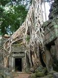Корни дерева и дверь Камбоджа виска Стоковое Фото