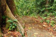 Корни дерева подстенка в тропическом лесе Стоковая Фотография