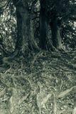 Корни дерева, черно-белая фотография Стоковые Изображения