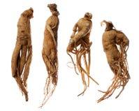 корни женьшени Стоковые Изображения RF