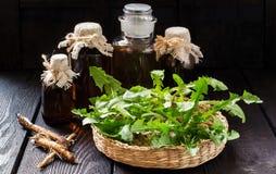 Корни и листья одуванчика, тинктуры и сиропа в бутылках Стоковые Фотографии RF