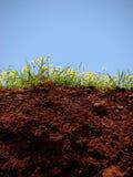 корни к верхней части Стоковое Изображение RF