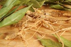 корни листьев залива свежие Стоковая Фотография RF