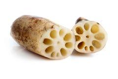 корни лотоса Стоковая Фотография RF