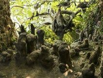 Корни маячить дерева стоковые фото